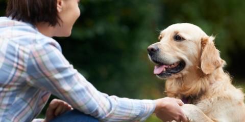 Img_veterinary partners,jpg