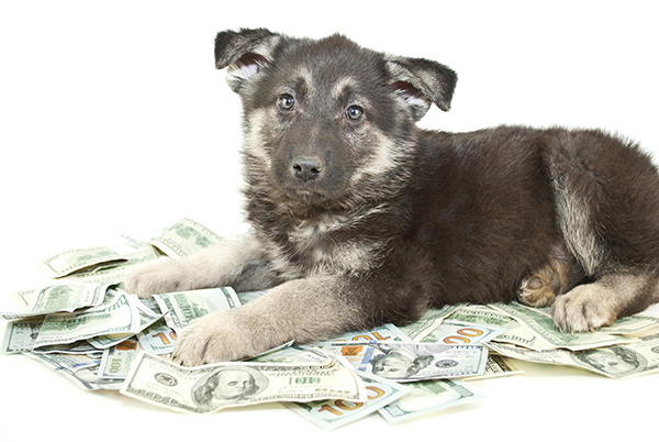 Puppy and Money